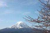 stock photo of mount fuji  - Mount Fuji and sakura not blossom at Kawaguchiko lake side - JPG