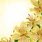 picture of stargazer-lilies  - yellow tiger lily flowers  - JPG