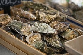 stock photo of stall  - Traditional  fish market stall full of fresh shell oysters - JPG