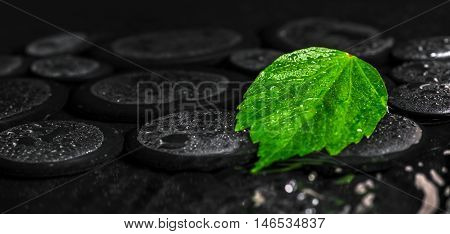 Beautiful Spa Background Of Green Leaf Hibiscus On Zen Basalt Stones With Drops In Ripple Reflection