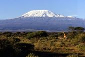 picture of kilimanjaro  - View of Mount Kilimanjaro - JPG