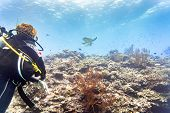 Tourist diving at coral reef in tropical ocean and watching Green sea turtle poster