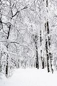 Footpath In Snowy Forest Of Timiryazevskiy Park Of Moscow City In Overcast Winter Day poster