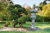 stock photo of bonsai tree  - Stone Lantern and Pruned Bonsai Tree at Japanese Garden in San Francisco - JPG