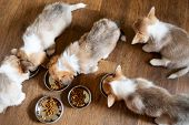Puppies Eating Food In The Kitchen From Bowls. Cute Puppy Eating Dog Food On Wooden Floor, Top View poster