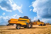 Combine Harvester In Action On Wheat Field. Harvesting Is The Process Of Gathering A Ripe Crop From  poster