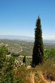 View Of Olive Groves And Countryside Seen From The Plaza Santa Lucia, Ubeda, Andalucia, Spain. poster