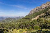 Grazalema National Park From The Puerto Del Boyar Viewpoint In Spain poster