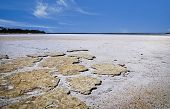 Hamelin Pool Marine Nature Reserve Is A Protected Marine Nature Reserve Located In The Unesco World  poster