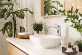 Vessel Sink And Green Plants In Stylish Bathroom. Interior Design poster