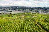 Beautiful Wineries In The Summer Season Of Western Germany, Visible Road Between Rows Of Grapes. poster