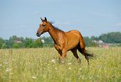 Purebred Horse In Field poster