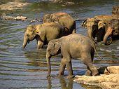 Elephant Bathing At The Orphanage poster
