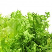 stock photo of escarole  - closeup of an escarole endive on a white background - JPG