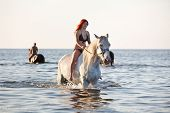 stock photo of shire horse  - Woman with big white horse swimming in the sea - JPG