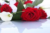 stock photo of arum  - Bouquet of vibrant fresh red roses and pure white arum or calla lilies lying on a reflective white surface with copyspace - JPG