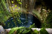 picture of cenote  - cenote ill kill mexico the plant and the water in the hole - JPG