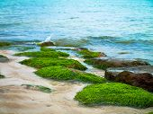 stock photo of green algae  - green algae on the sea - JPG
