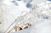 Hoarfrost On Branches Of Herbs