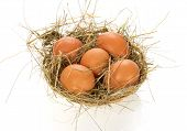 stock photo of bast  - Eggs - JPG