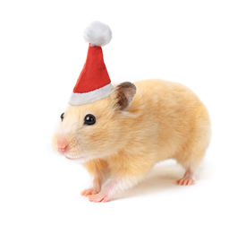 image of gerbil  - Christmas hamster isolated on white background - JPG