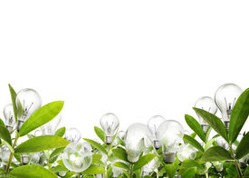 pic of photosynthesis  - Idea  - JPG
