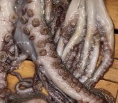 image of sucker-fish  - Octopus on sale in the fish market