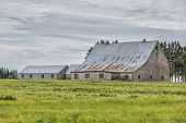 picture of sag  - An old sagging barn with a field of grain - JPG