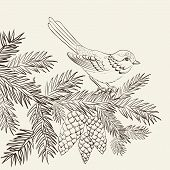 picture of cardinal-bird  - Bird on christmas fir and pinecone - JPG