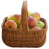 foto of crude  - Apple Fruit Crude Basket Ripe Sweet Product Fruit Food is A Lot Of - JPG
