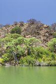 picture of baobab  - Green island in Lake Baringo in Kenya with Baobab Trees - JPG