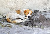 stock photo of seeing eye dog  - dirty homeless sleeping dog in the street - JPG