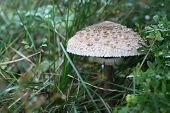 stock photo of toadstools  - Closeup of toadstool on background with green grass - JPG