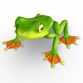 image of exotic frog  - A flying frog is a frog that has the ability to achieve gliding flight - JPG