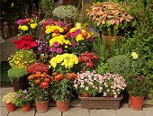 pic of flower shop  - An outdoor flower shop displays a variety of potted flowers and shrubs - JPG