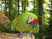 Happy Parrot poster