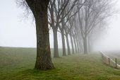 stock photo of row trees  - Rural landscape with a dike and a row of tall trees on a foggy day in the end of the winter season - JPG
