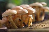 stock photo of toadstools  - Small toadstools mushrooms growing in autumnal forest - JPG