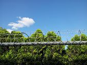 stock photo of barbed wire fence  - A barbed wire fence with trees and blue sky - JPG
