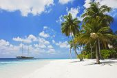 image of tropical plants  - Beautiful tropical beach with powder white sand at sunlight - JPG