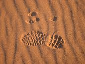 picture of paw-print  - photo taken in Sossusvlei Namibia southern Africa - JPG