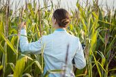 Scientist in corn field testing a new GMO breed looking pleased poster