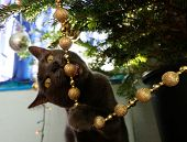 Naughty Cat Chewing On Christmas Tree Decorations poster