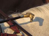 Riding Crop With Brass Horse Head Resting On Horses Mane Casting Shadow In Andalusian Sunshine poster