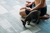 Friendly Yoga Training Companion. Sphynx Cat And His Owner Relaxing Together After Gym Workout. Phys poster