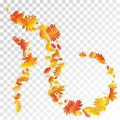 Oak, Maple, Wild Ash Rowan Leaves Vector, Autumn Foliage On Transparent Background. Red Orange Gold  poster
