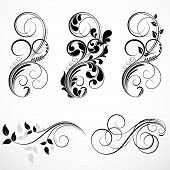 image of scroll design  - Set of floral elements for design - JPG