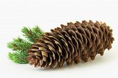 Composition Of Big Pine Cone With Pine Twig Isolated On White Background. poster