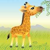 image of baby animal  - Baby Animal collection: Giraffe