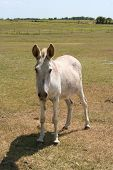 stock photo of jack-ass  - a donkey on a farm - JPG